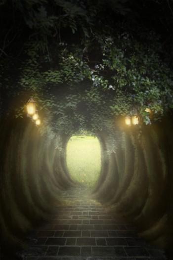 不思議な森のトンネル