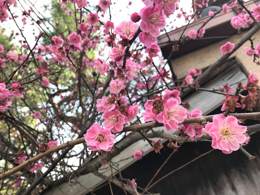 たい焼きなみへい〜OKASHI 0467〜由比ケ浜散歩