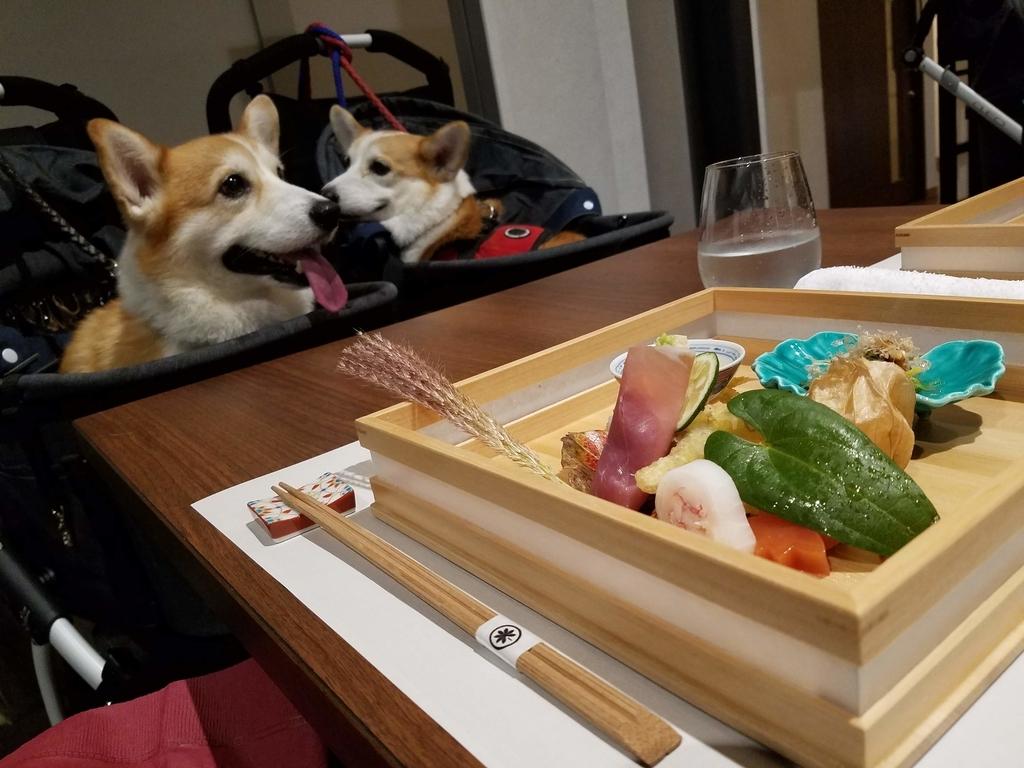 犬と泊まれるホテル 犬と一緒の食事