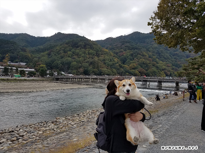 モモと嵐山渡月橋