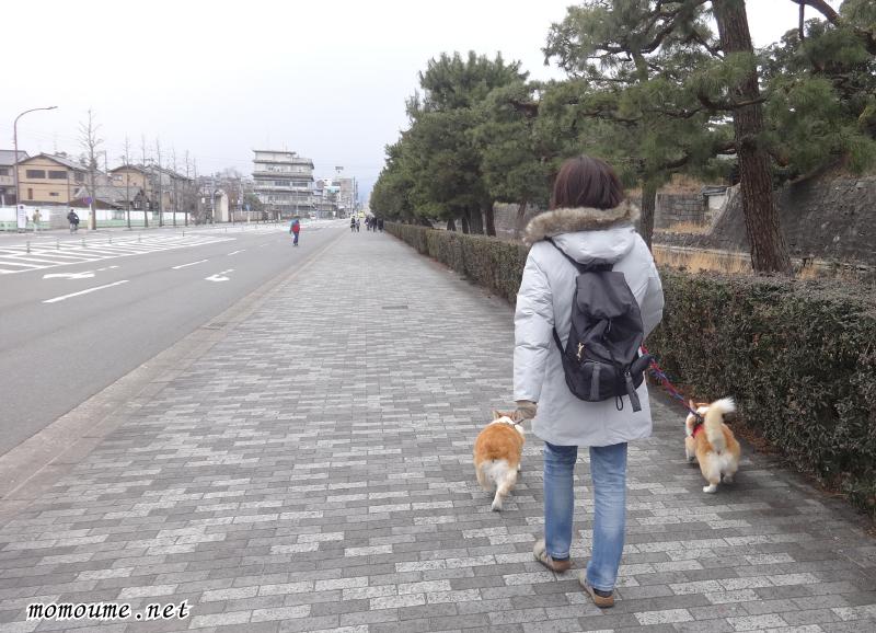 二条城堀の外側を散歩