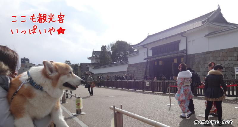 二条城 東大手門を眺めるモモ