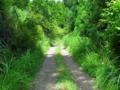 [林道]原の平線