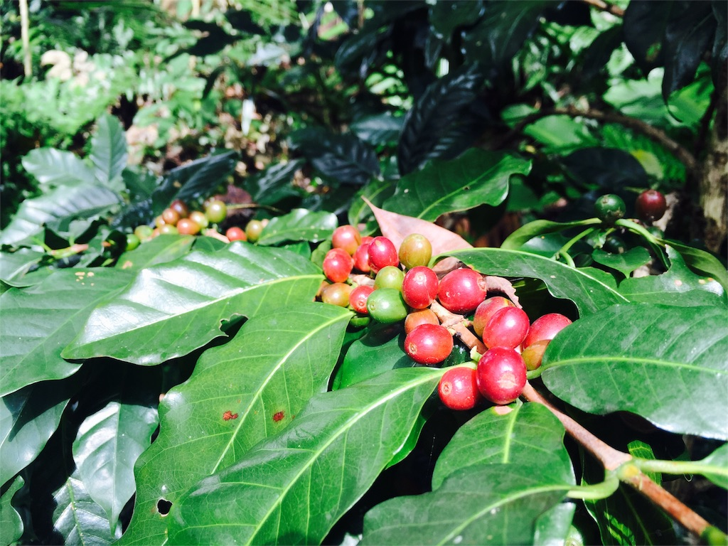 f:id:coffeejourney:20170215200455j:image