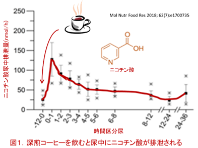 f:id:coffees_for_healthy_life:20190501120211p:plain
