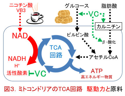 f:id:coffees_for_healthy_life:20190501120313p:plain