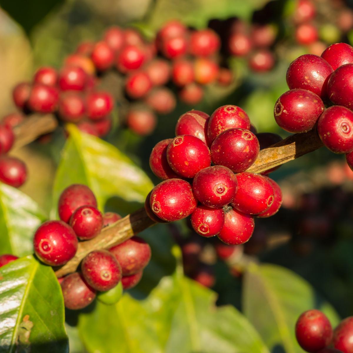 f:id:coffeetraveland:20210709000310p:plain