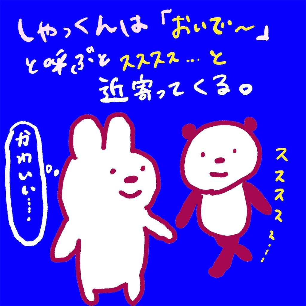 f:id:colo_shaku:20190227235336j:image