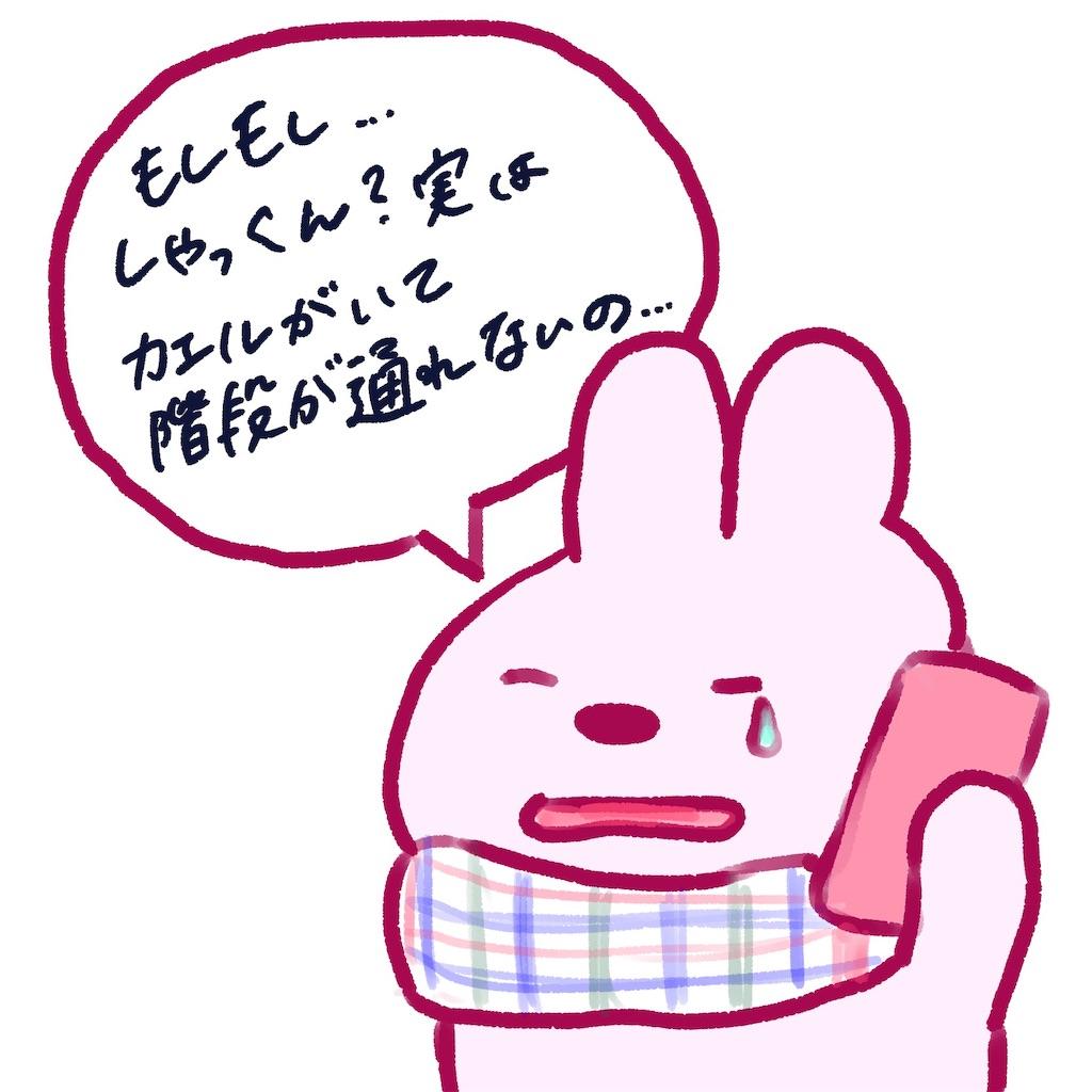 f:id:colo_shaku:20190304205841j:image