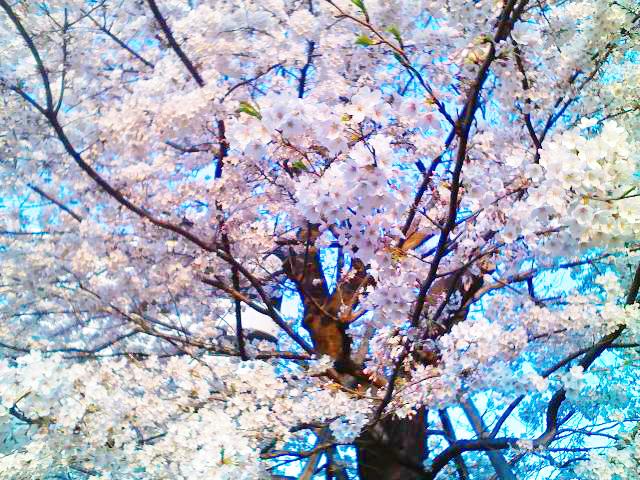 f:id:color-hiyoko:20090406060306j:plain