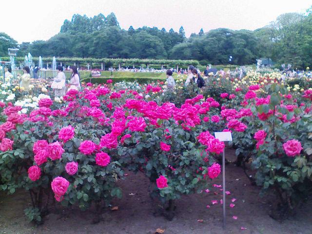 f:id:color-hiyoko:20100519115714j:plain