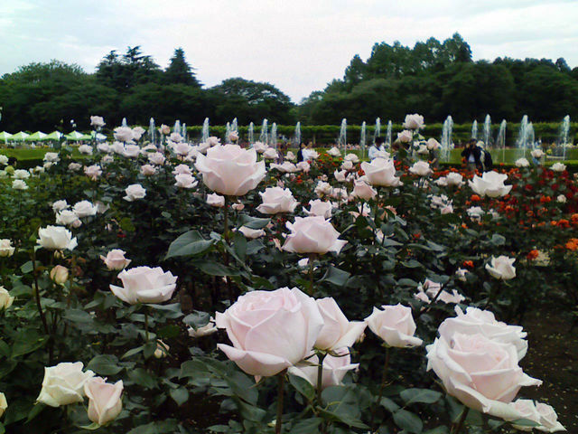 f:id:color-hiyoko:20100519122112j:plain