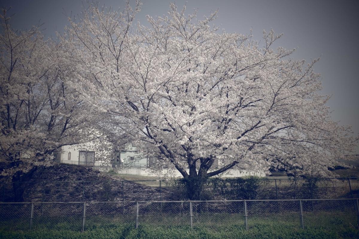 f:id:color-hiyoko:20210331220037j:plain