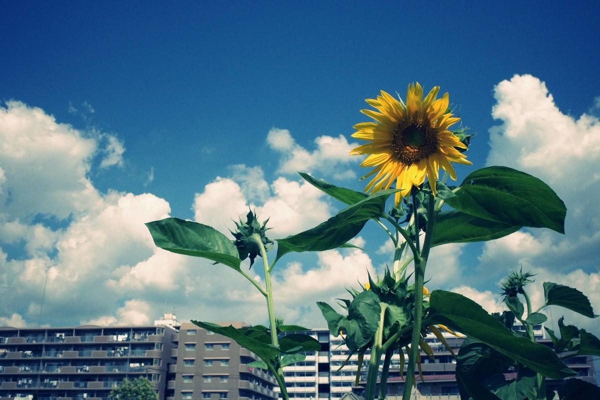 f:id:color-hiyoko:20210801095801j:plain