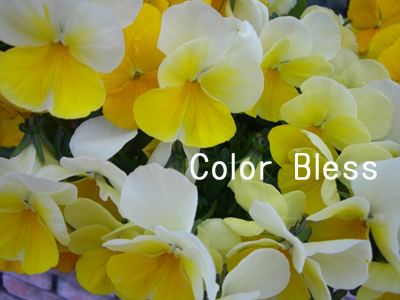 f:id:colorbless:20100404065402j:image