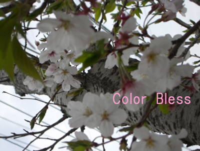 f:id:colorbless:20100404065958j:image