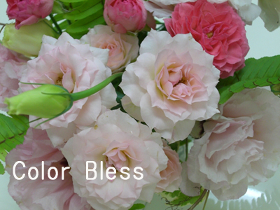 f:id:colorbless:20100718192044j:image