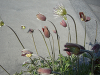 f:id:colorbless:20110406161149j:image