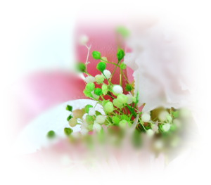 f:id:colorbless:20160803230537j:image