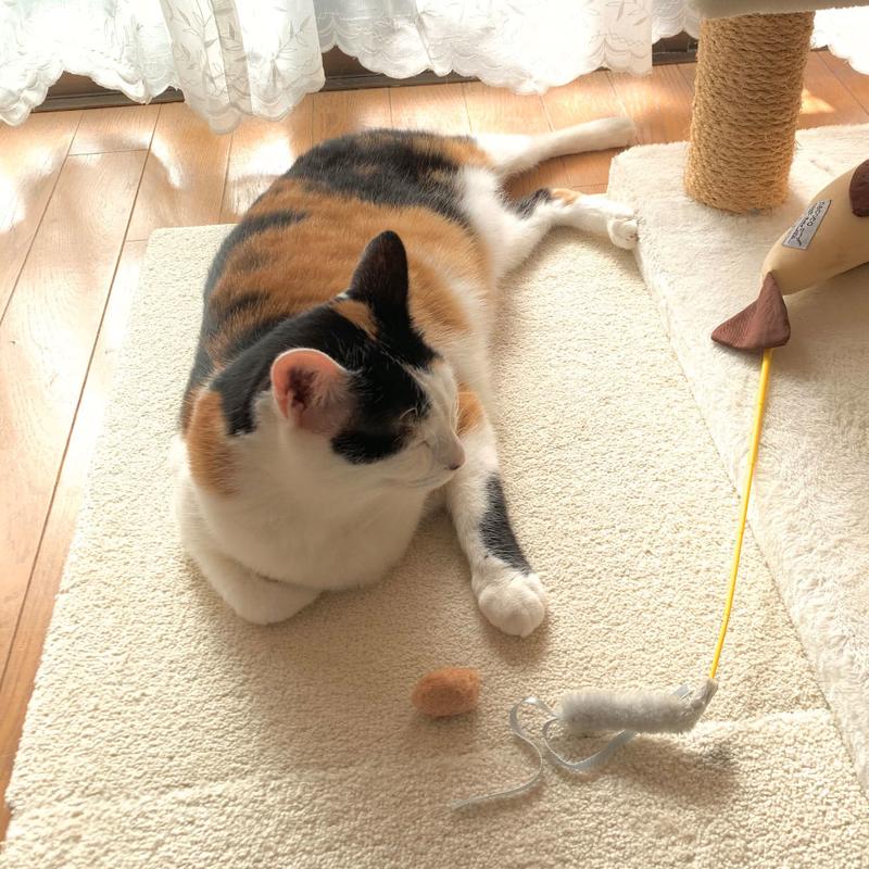 アイキャッチ-猫7歳