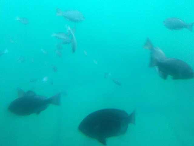 実際に見えた海底の様子