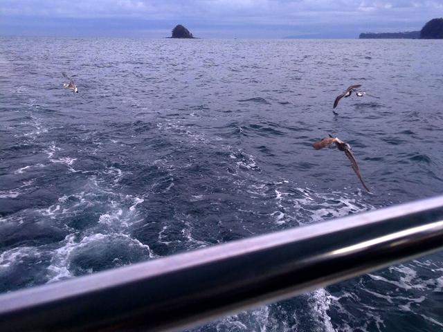 餌を投げるとカモメが沢山寄ってきました