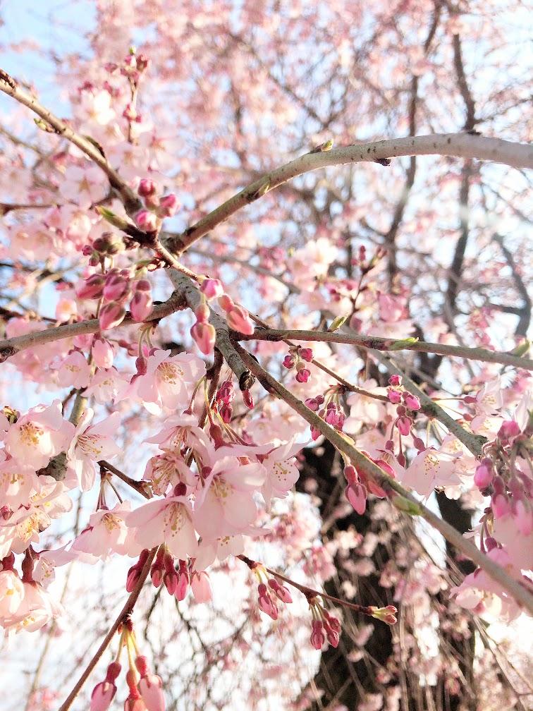 春なのにだるい 原因 解毒 対処法 改善 むくみ