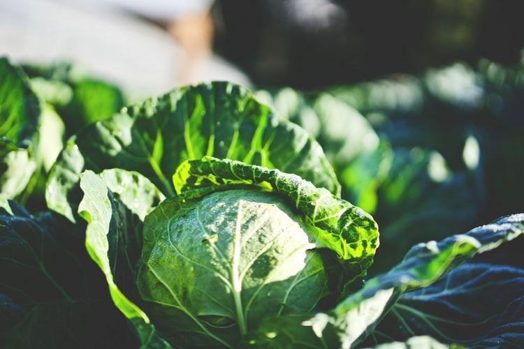 過敏性腸症候群によい食べ物とは?