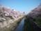 今日の山崎川。昨日の嵐にも耐えて、まだまだいけます