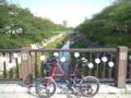 新緑の山崎川。ちなみに今日からヘルメットデビュー(^^)v