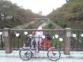 山崎川はもうすぐ紅葉が始まるかも。