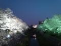 昨日の山崎川夜桜