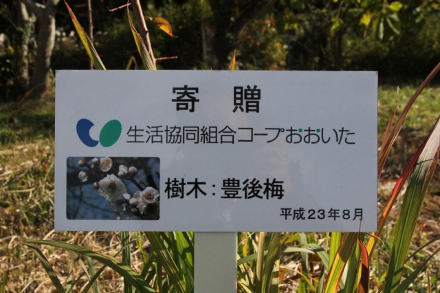 f:id:coop_fukushima_oita:20121214115001j:image