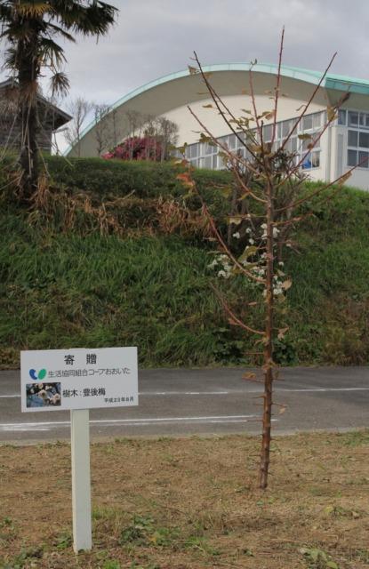 f:id:coop_fukushima_oita:20121214115030j:image