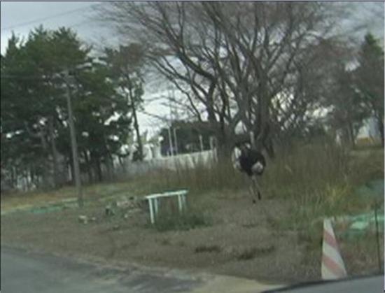 f:id:coop_fukushima_oita:20130722120734j:image
