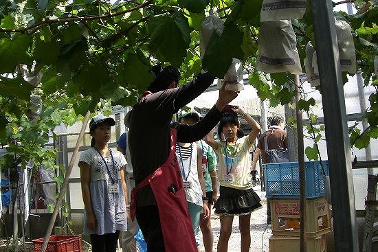 f:id:coop_fukushima_oita:20130824153550j:image