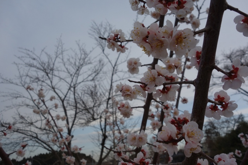f:id:coop_fukushima_oita:20160426122637j:image