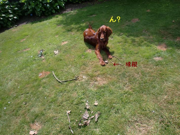 f:id:coppa06:20100203082150j:image
