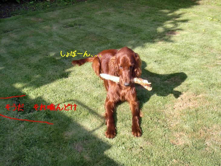 f:id:coppa06:20100228132540j:image