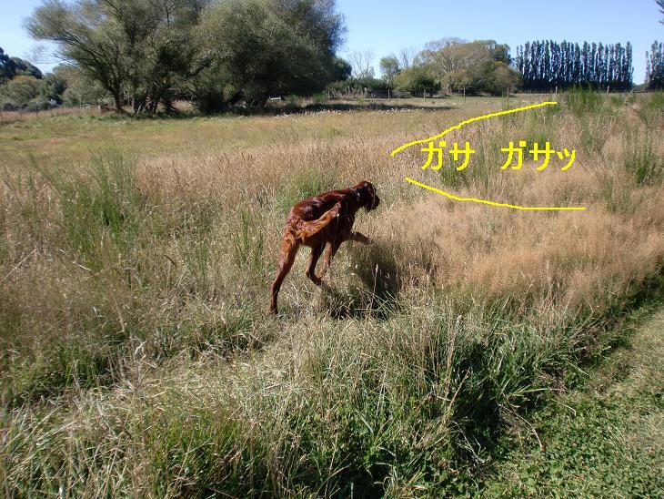 f:id:coppa06:20100304120721j:image