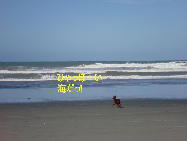 f:id:coppa06:20100307125217j:image