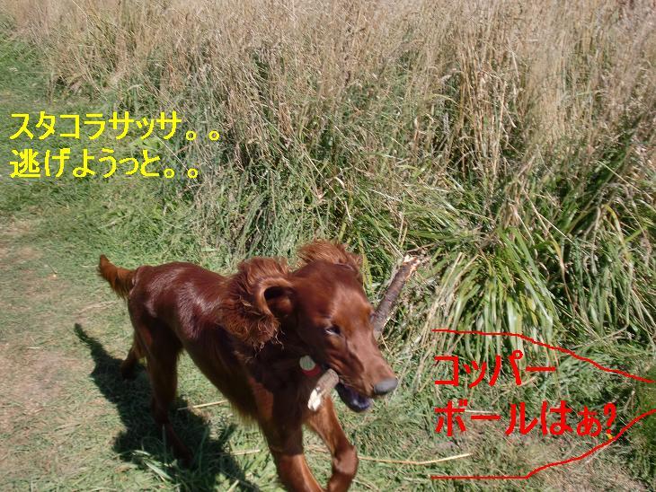 f:id:coppa06:20100308110451j:image