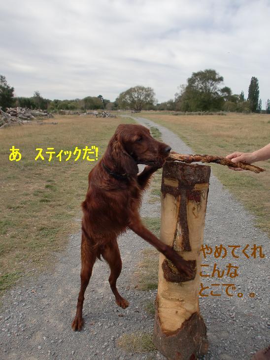 f:id:coppa06:20100314121630j:image