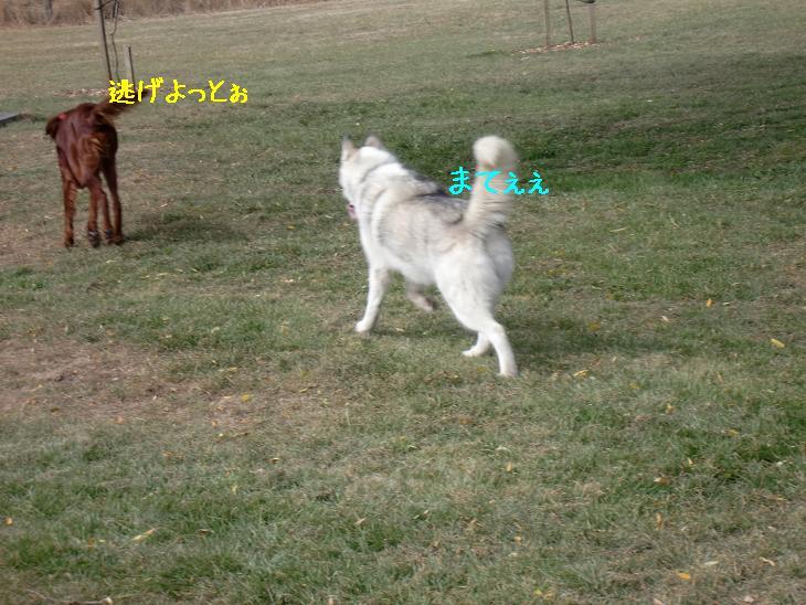 f:id:coppa06:20100319102536j:image