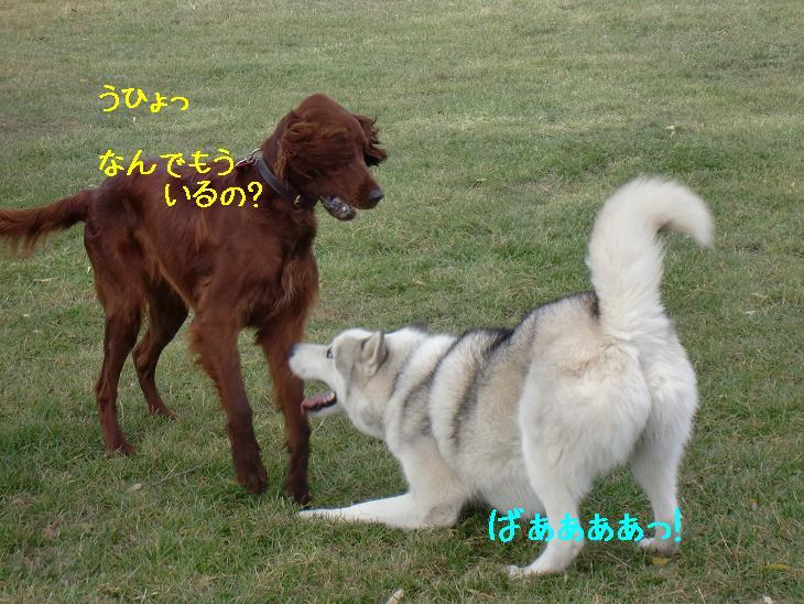 f:id:coppa06:20100319102715j:image