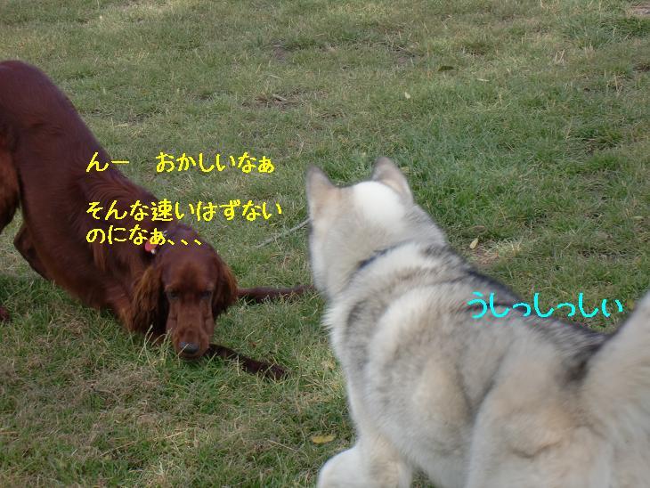 f:id:coppa06:20100319102747j:image