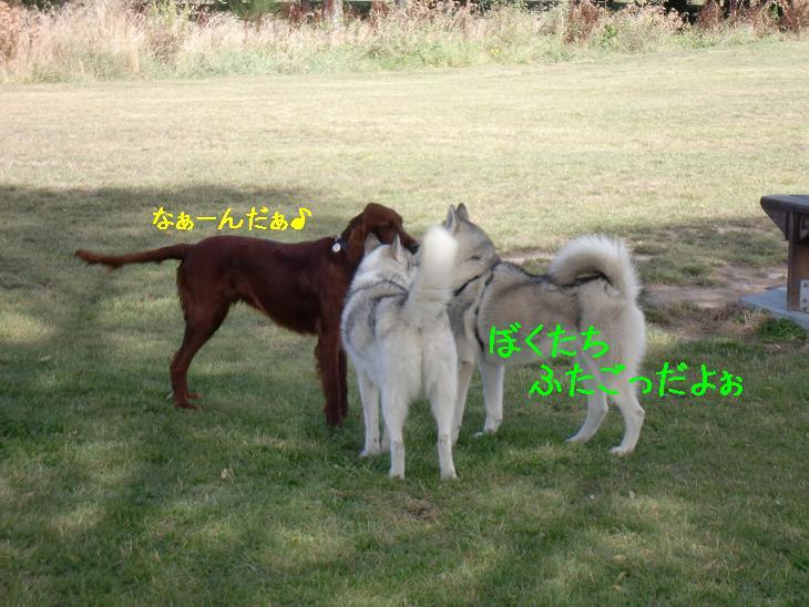f:id:coppa06:20100319103705j:image
