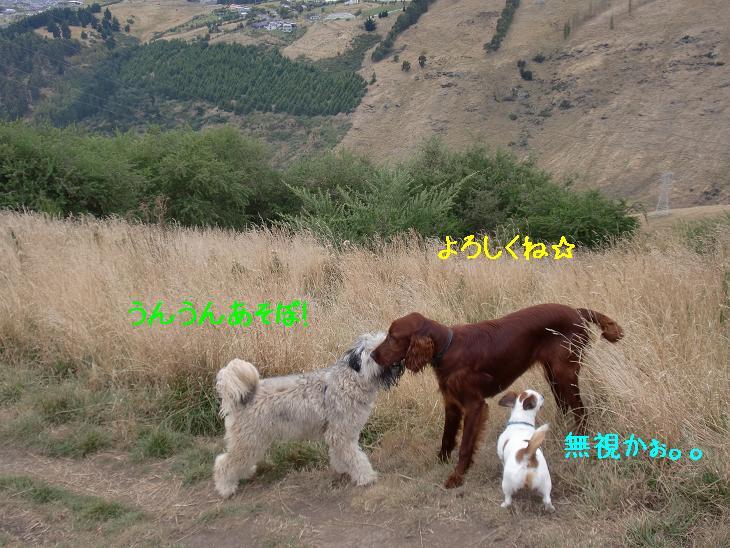 f:id:coppa06:20100320100353j:image