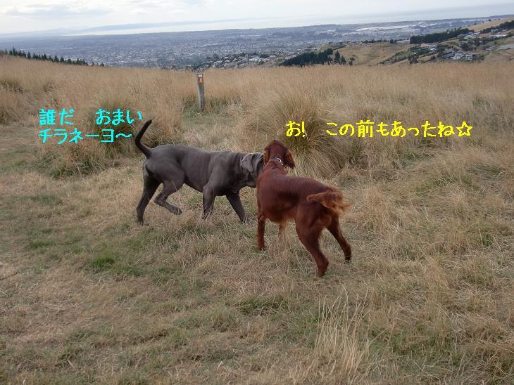 f:id:coppa06:20100320103308j:image