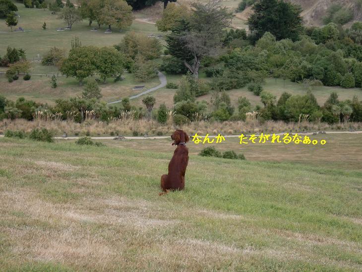 f:id:coppa06:20100320115141j:image